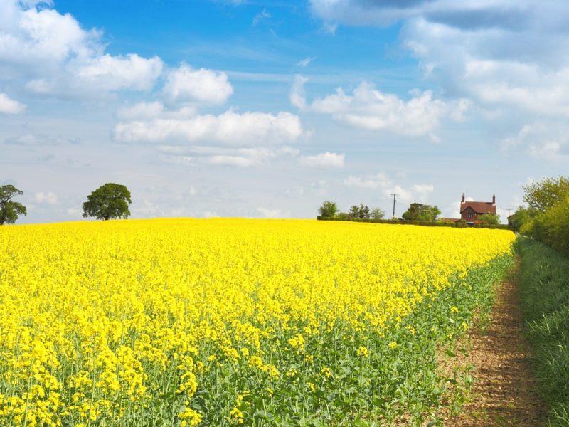 Przygotowujemy maszyny rolnicze na wiosnę. Na co zwrócić uwagę?