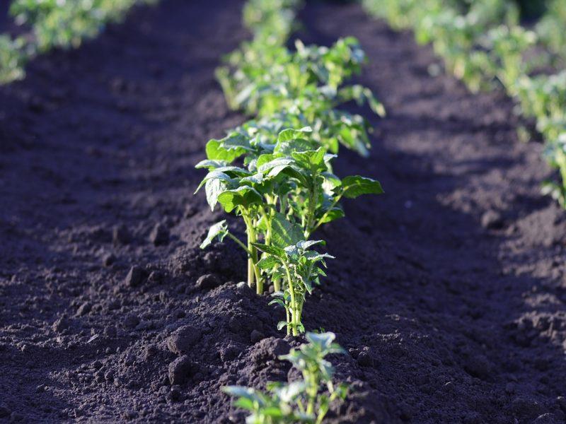 Nawozy najlepsze dla uprawy warzyw