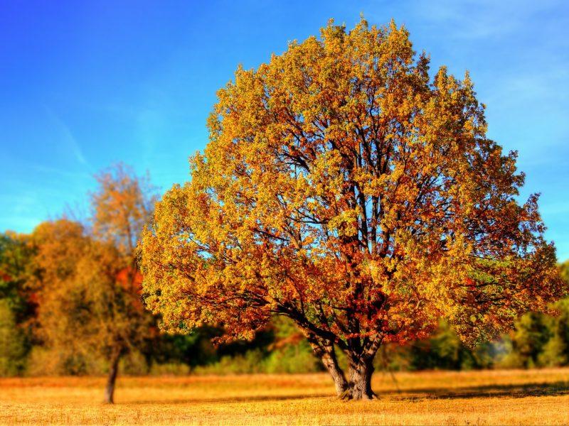 Jakie prace rolnicze wykonujemy jesienią? Poradnik rolniczy