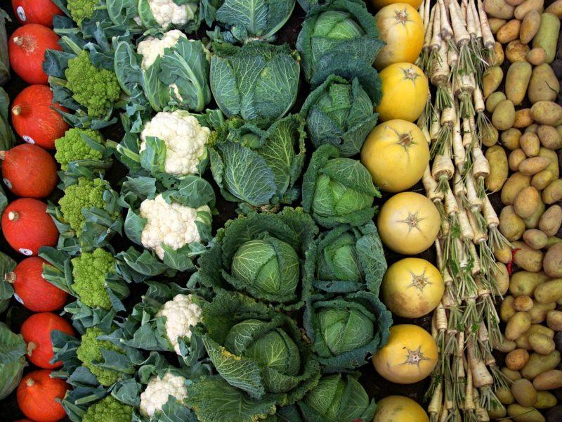 Uprawa warzyw - biznes, który się opłaca