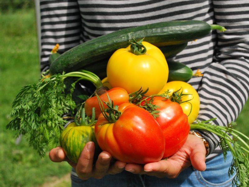 Producent rolny - to brzmi dumnie!