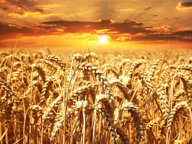 Nowy sezon w gospodarstwie rolnym - co sadzimy i siejemy wiosną?