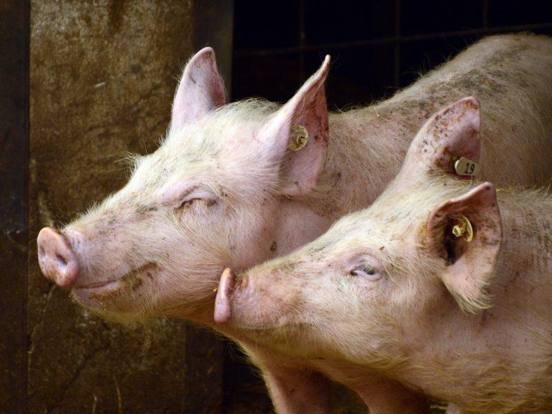 Pasze dla zwierząt - czy warto je robić samodzielnie?