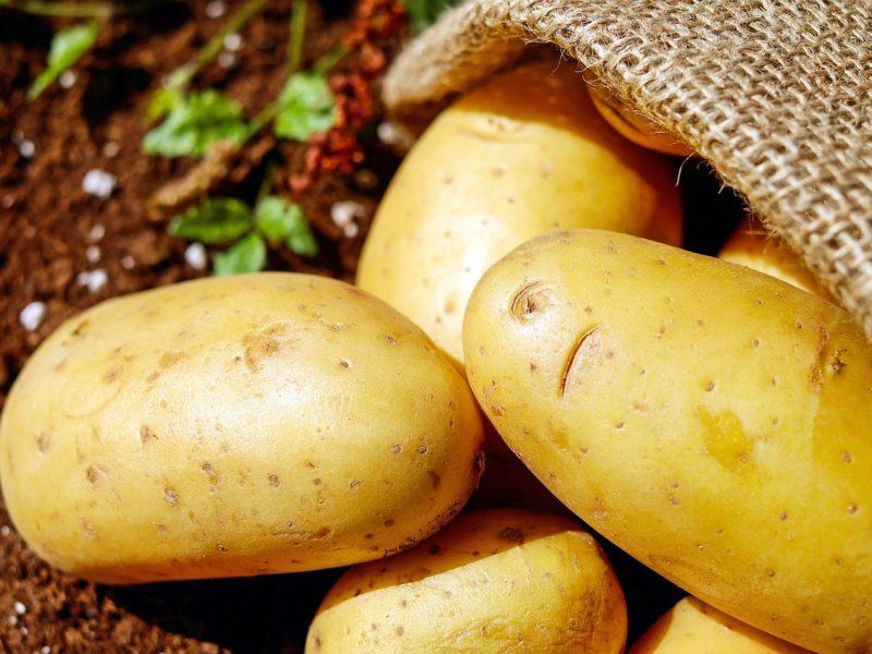Opłacalne zbiory - jaki kombajn do ziemniaków wybrać?