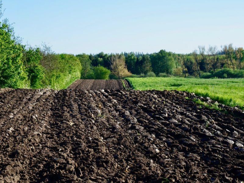 Odpowiednie przygotowanie gleby uprawnej przed zimą