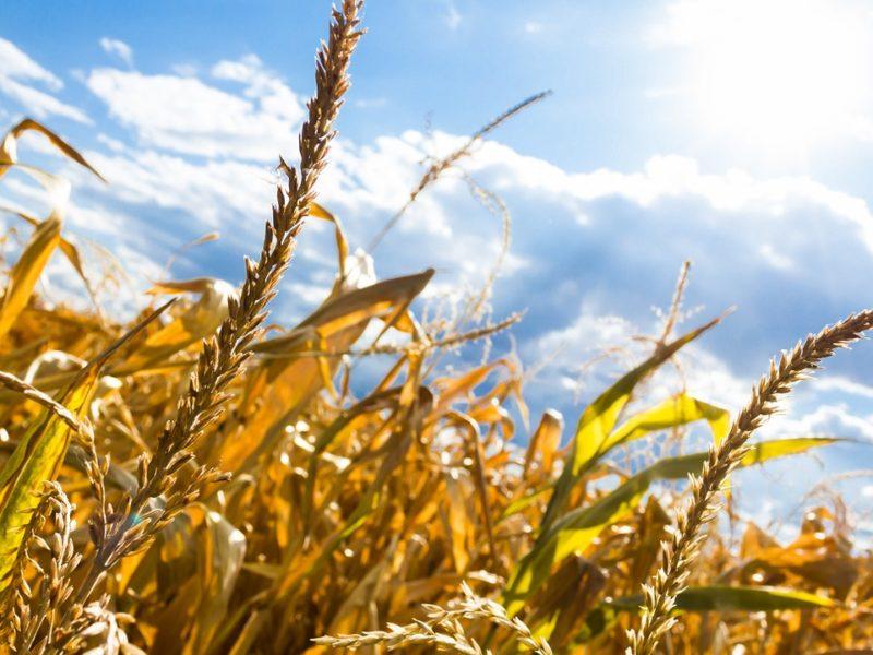 Chcesz zostać producentem rolnym? Sprawdź na czym to polega