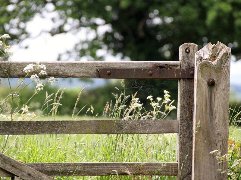 Dbamy o nasze hodowle – wybieramy najlepsze ogrodzenia pastwiskowe