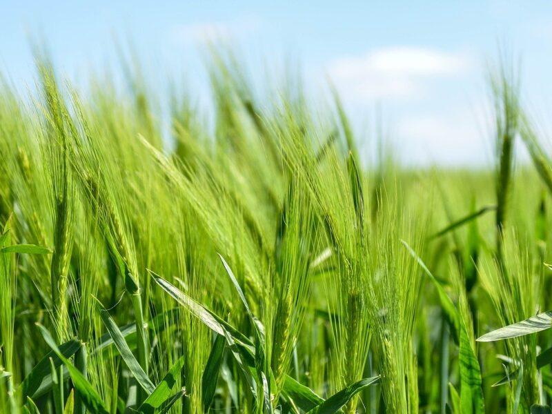 Rolnictwo ekologiczne – na czym polega?