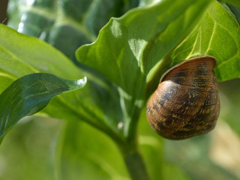 Rolnicy hodowcami ślimaków