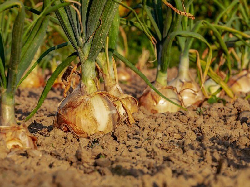 Stres roślin: czym stresują się rośliny i jak je chronić?