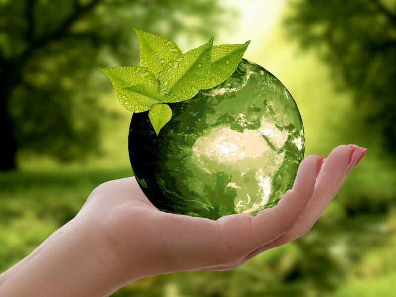 Czy rolnictwo ekologiczne się opłaca?