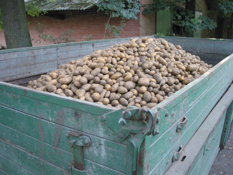 Obsypnik do ziemniaków - dlaczego warto go wykorzystać?